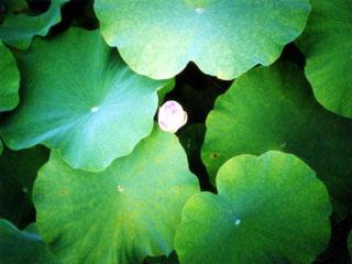 lotus050522